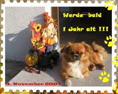 An den Beitrag angehängtes Bild: http://www.beepworld.de/memberdateien/members32/tcl/kira1jahr_1.jpg